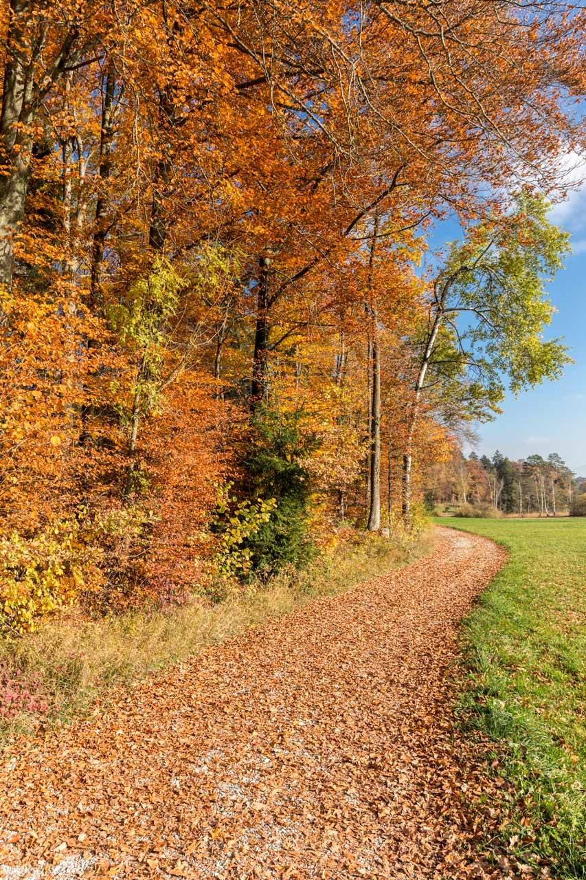 Ried-Herbst_20151031_3859-als-Smartobjekt-1