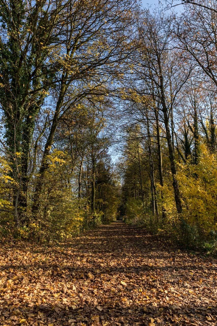 Ried-Herbst_20151101_4324-als-Smartobjekt-1